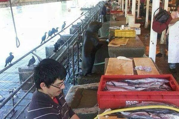 Just a sea lion selling fishes in super market